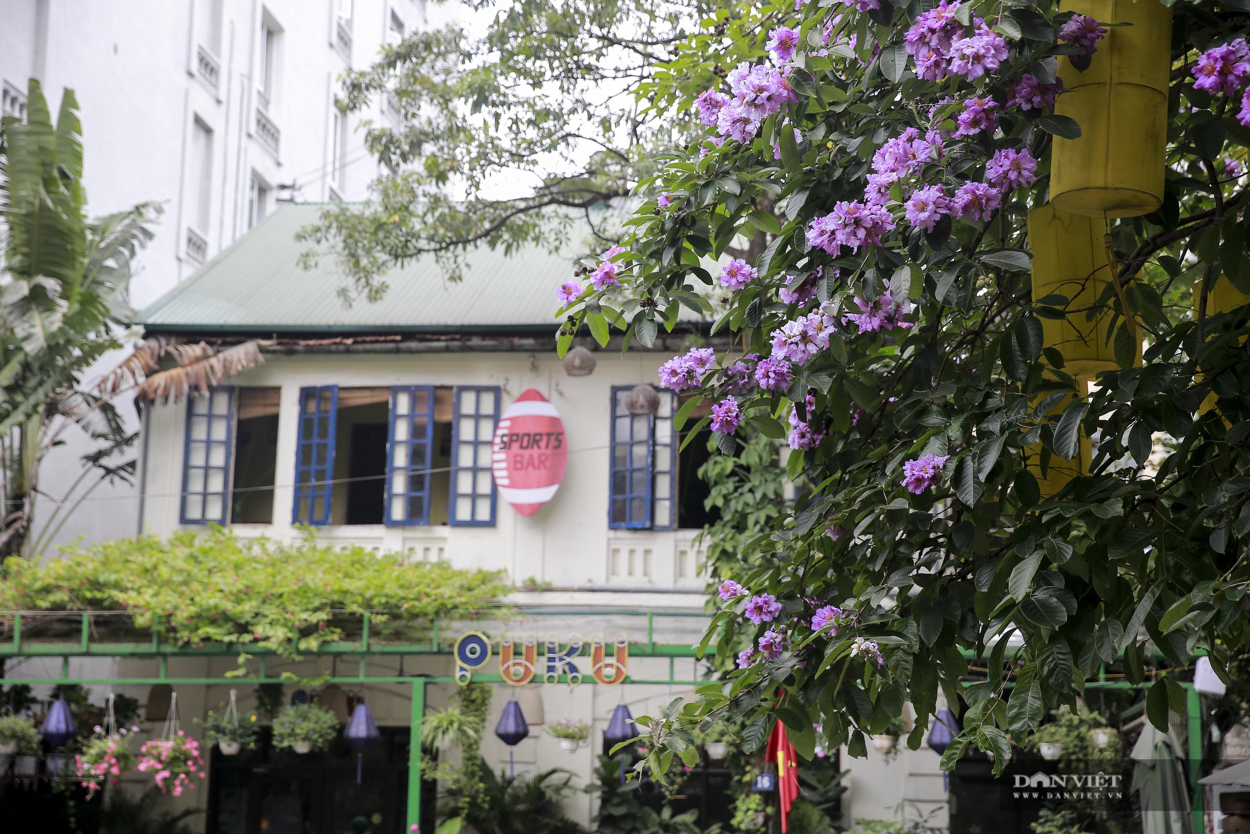 Hoa bằng lăng: loài hoa biểu tượng của sự thủy chung nở rộ khắp đường phố Hà Nội - Ảnh 6.