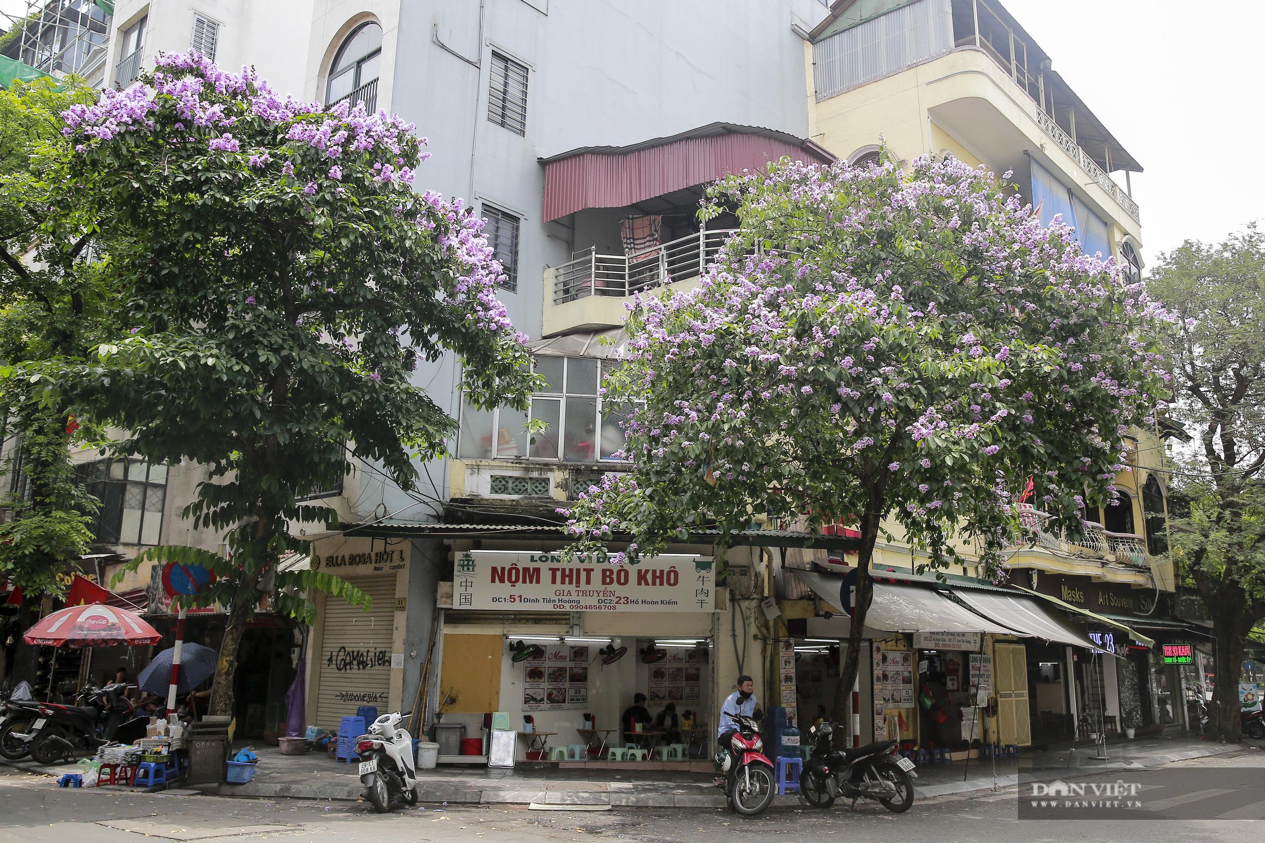 Hoa bằng lăng: loài hoa biểu tượng của sự thủy chung nở rộ khắp đường phố Hà Nội - Ảnh 11.