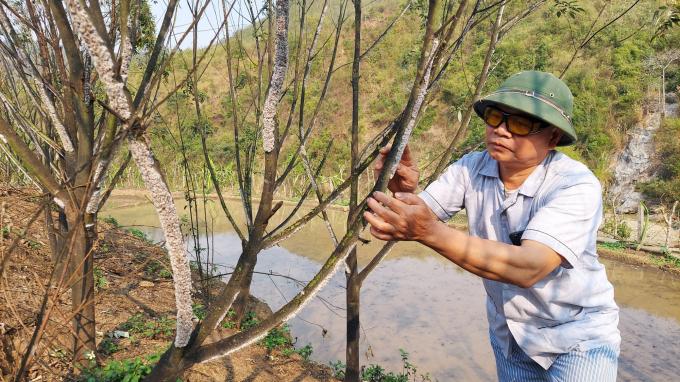 Một ông nông ở Thanh Hóa nuôi loài côn trùng này rồi lấy chất thải của nó đem bán lãi gấp 20 lần trồng keo - Ảnh 3.