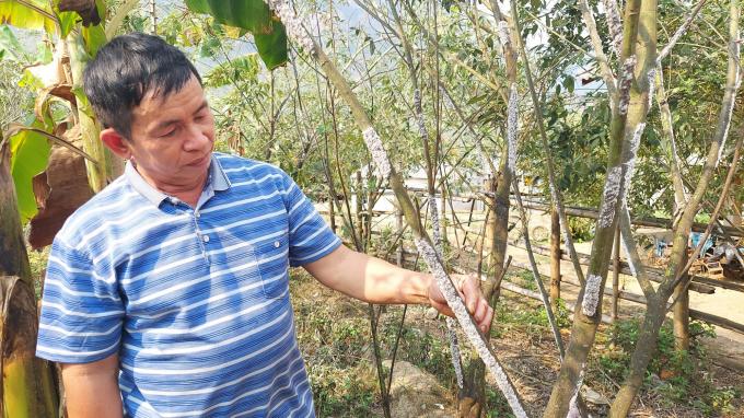 Một ông nông ở Thanh Hóa nuôi loài côn trùng này rồi lấy chất thải của nó đem bán lãi gấp 20 lần trồng keo - Ảnh 4.