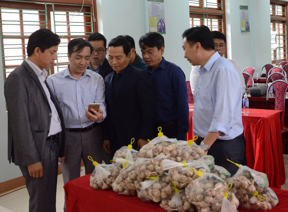 Hòa Bình: Đặc sản tỏi tía trồng trong sương mù ở huyện Mai Châu có gì đặc biệt? - Ảnh 1.