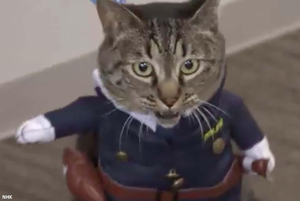 Nhật Bản: Kỳ lạ chú mèo được bổ nhiệm làm cảnh sát trưởng một ngày vì cứu sống người cao tuổi - Ảnh 1.