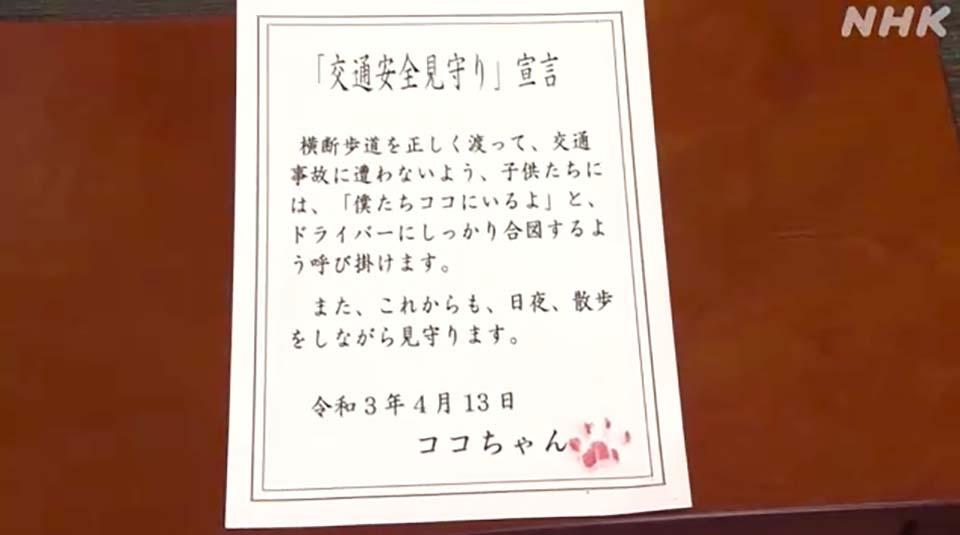 Nhật Bản: Kỳ lạ chú mèo được bổ nhiệm làm cảnh sát trưởng một ngày vì cứu sống người cao tuổi - Ảnh 3.
