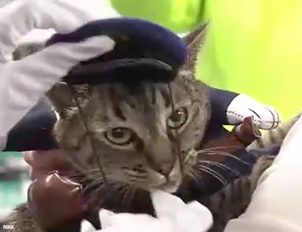 Nhật Bản: Kỳ lạ chú mèo được bổ nhiệm làm cảnh sát trưởng một ngày vì cứu sống người cao tuổi - Ảnh 4.