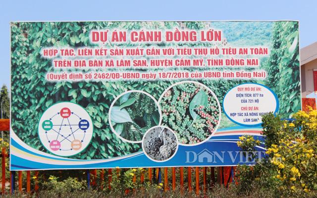 Dự án cánh đồng lớn hồ tiêu ở xã Lâm San, huyện Cẩm Mỹ.
