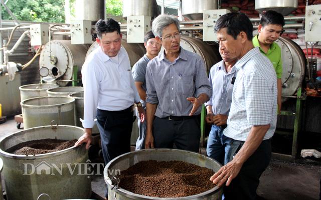 HTX Lâm San thu mua tiêu sạch với giá cao hơn thị trường.