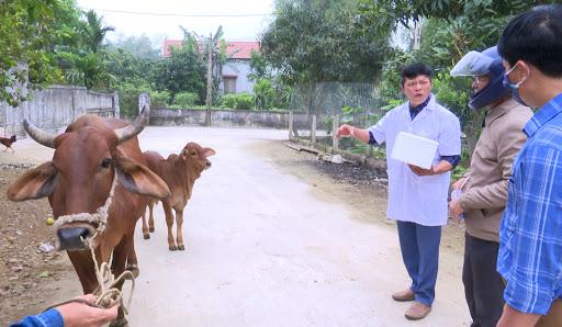 Đã có 1.179 ổ dịch viêm da nổi cục trên trâu, bò, Bộ NNPTNT chỉ đạo khẩn - Ảnh 1.