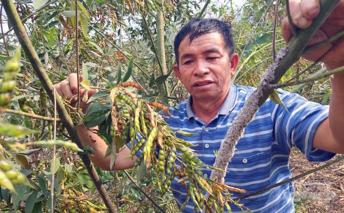 Một ông nông ở Thanh Hóa nuôi loài côn trùng này rồi lấy chất thải của nó đem bán lãi gấp 20 lần trồng keo - Ảnh 1.