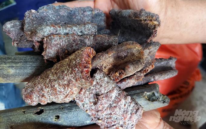Một ông nông ở Thanh Hóa nuôi loài côn trùng này rồi lấy chất thải của nó đem bán lãi gấp 20 lần trồng keo - Ảnh 2.