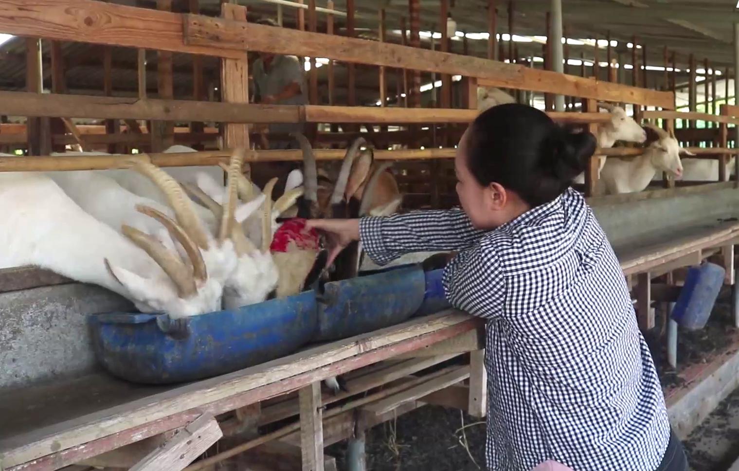 Tiền Giang: Miệt Gò đổ xô nuôi con này thoát nghèo, ai ngờ nhiều nông dân trở nên giàu có - Ảnh 4.