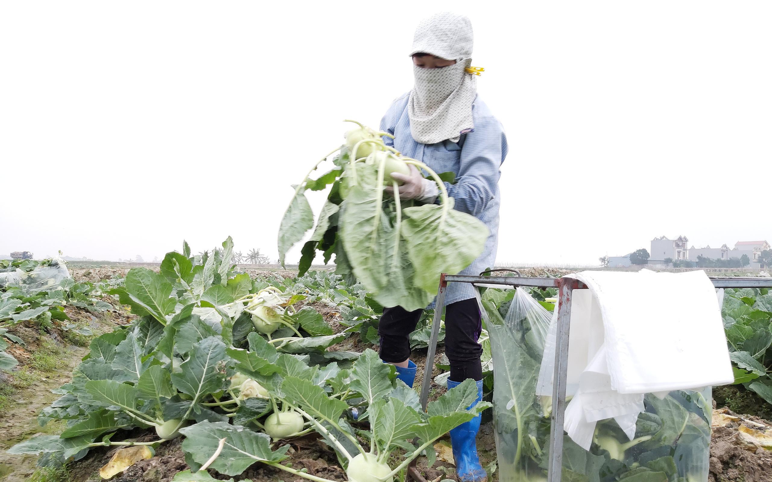 """Những cuộc """"cách mạng"""" trên đất lúa kém hiệu quả (bài 2):Tỉnh """"bật đèn xanh"""", nông dân làm đúng"""