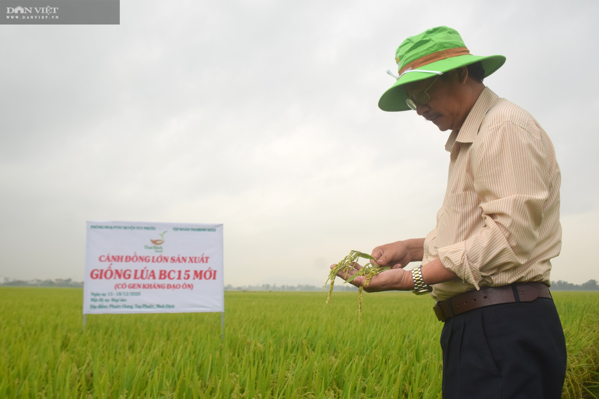 Hiệu quả bất ngờ từ giống lúa BC15 của ThaiBinh Seed trên đất Bình Định - Ảnh 2.