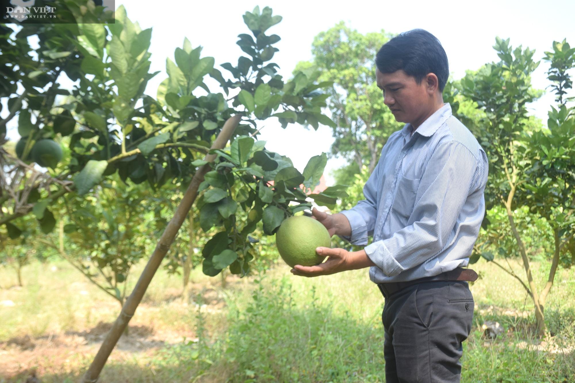 """Bình Định: Vùng này thiếu nước, nông dân """"bắt tay"""" chuyển đổi cây trồng và cái kết không ngờ - Ảnh 1."""