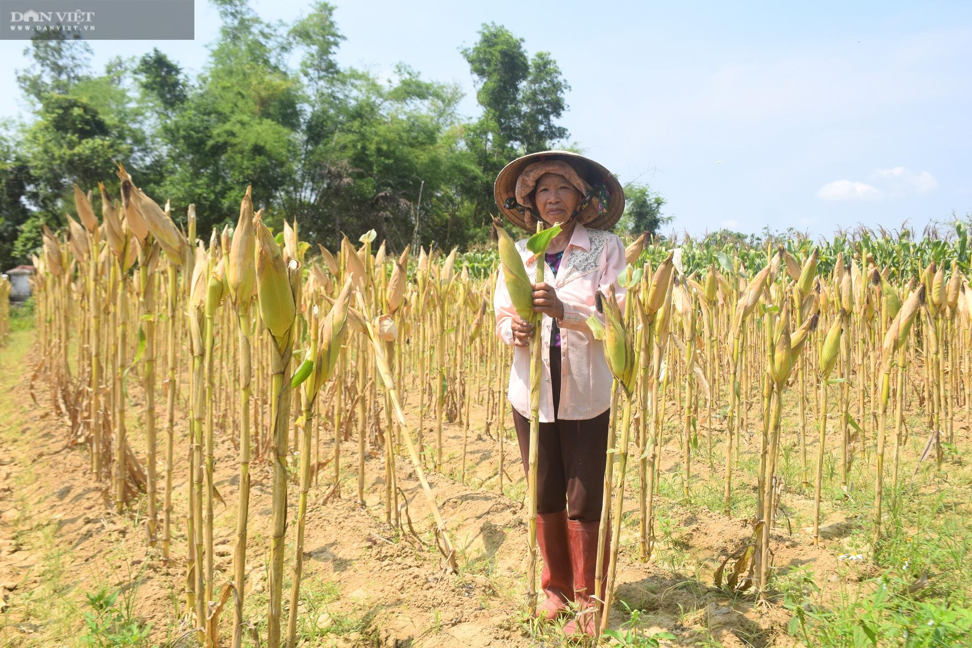 """Bình Định: Vùng này thiếu nước, nông dân """"bắt tay"""" chuyển đổi cây trồng và cái kết không ngờ - Ảnh 3."""