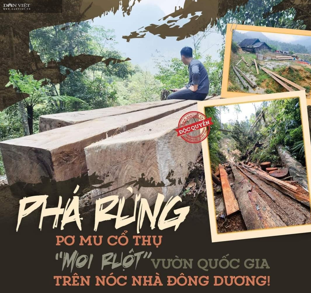 """Chủ tịch UBND tỉnh Lào Cai nói vụ phá rừng Hoàng Liên: """"Sai phạm rõ ràng, xử lý nghiêm, không bao che""""! - Ảnh 1."""