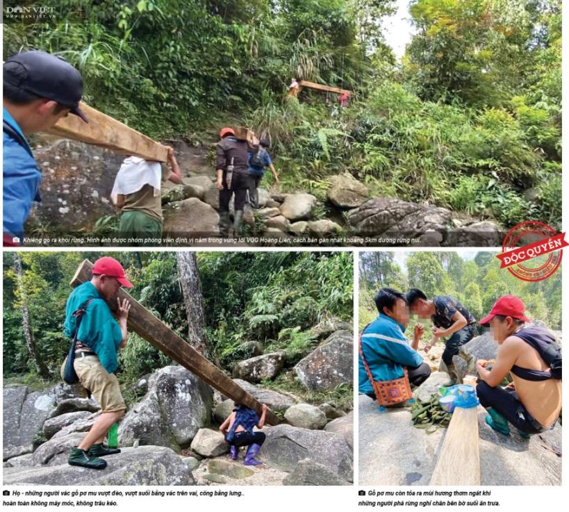 """Chủ tịch UBND tỉnh Lào Cai nói vụ phá rừng Hoàng Liên: """"Sai phạm rõ ràng, xử lý nghiêm, không bao che""""! - Ảnh 2."""