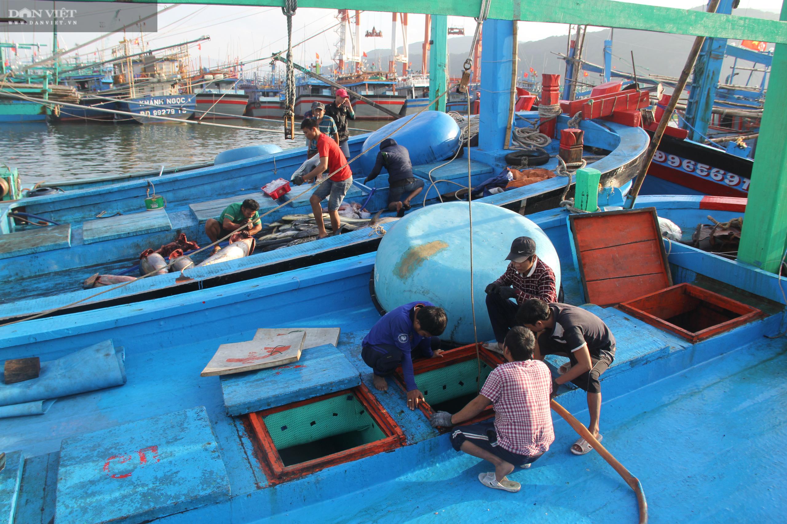 """Gỡ khó""""… cho nghề câu cá ngừ """"khủng"""", trọng lượng hàng chục kg, thậm chí hàng trăm kg/con - Ảnh 3."""