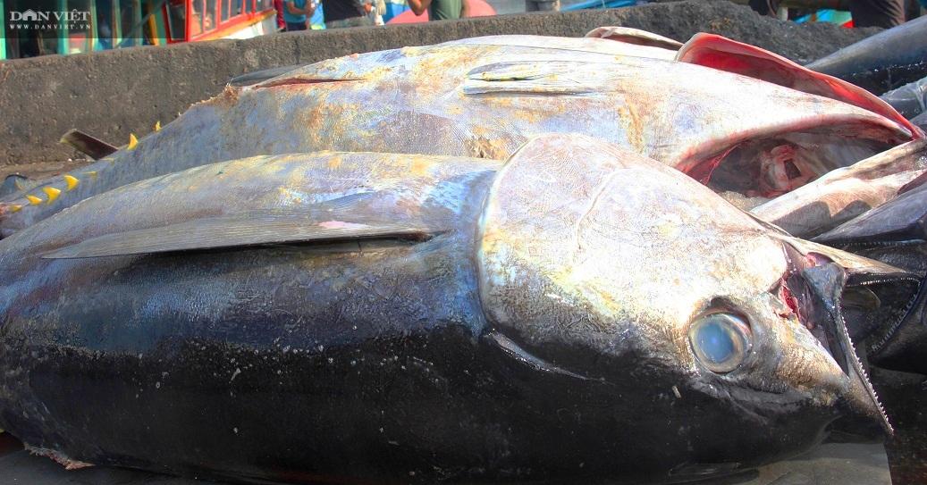"""Gỡ khó""""… cho nghề câu cá ngừ """"khủng"""", trọng lượng hàng chục kg, thậm chí hàng trăm kg/con - Ảnh 4."""