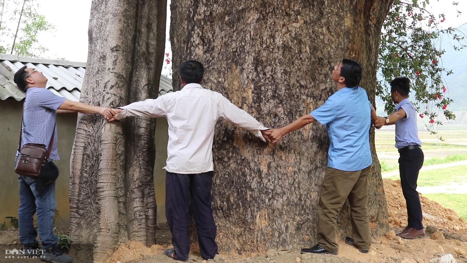 """""""Thần cây"""" khổng lồ nghìn năm tuổi – tượng đài sống của người dân Ngọc Chiến - Ảnh 4."""