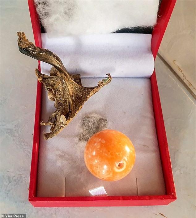 """Được """"báo mộng"""", ngư dân vớ được ngọc trai màu cam to bằng đồng xu giá gần 8 tỉ đồng - Ảnh 4."""