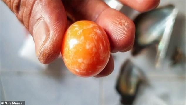 """Được """"báo mộng"""", ngư dân vớ được ngọc trai màu cam to bằng đồng xu giá gần 8 tỉ đồng - Ảnh 5."""