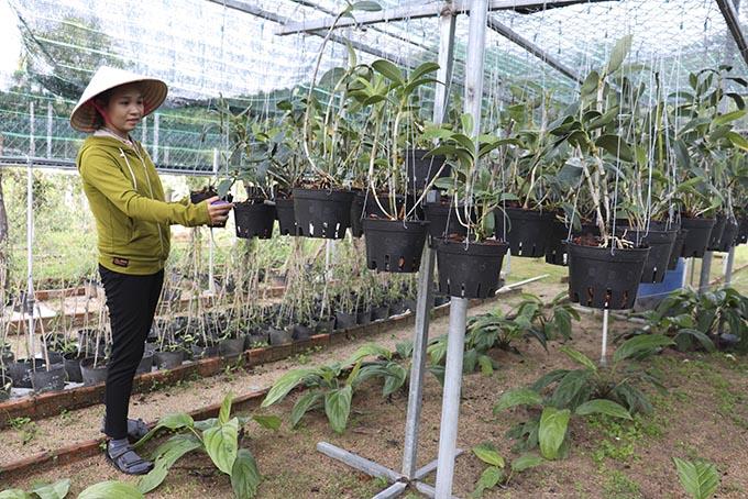 Có bao nhiêu loài ran rừng ở tỉnh Khánh Hòa, hiện nay tỉnh này đang bảo tồn bao nhiêu loài lan rừng quý hiếm? - Ảnh 2.