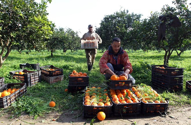 Vì sao Algeria tiếp tục ngừng nhập khẩu 13 loại trái cây? - Ảnh 1.