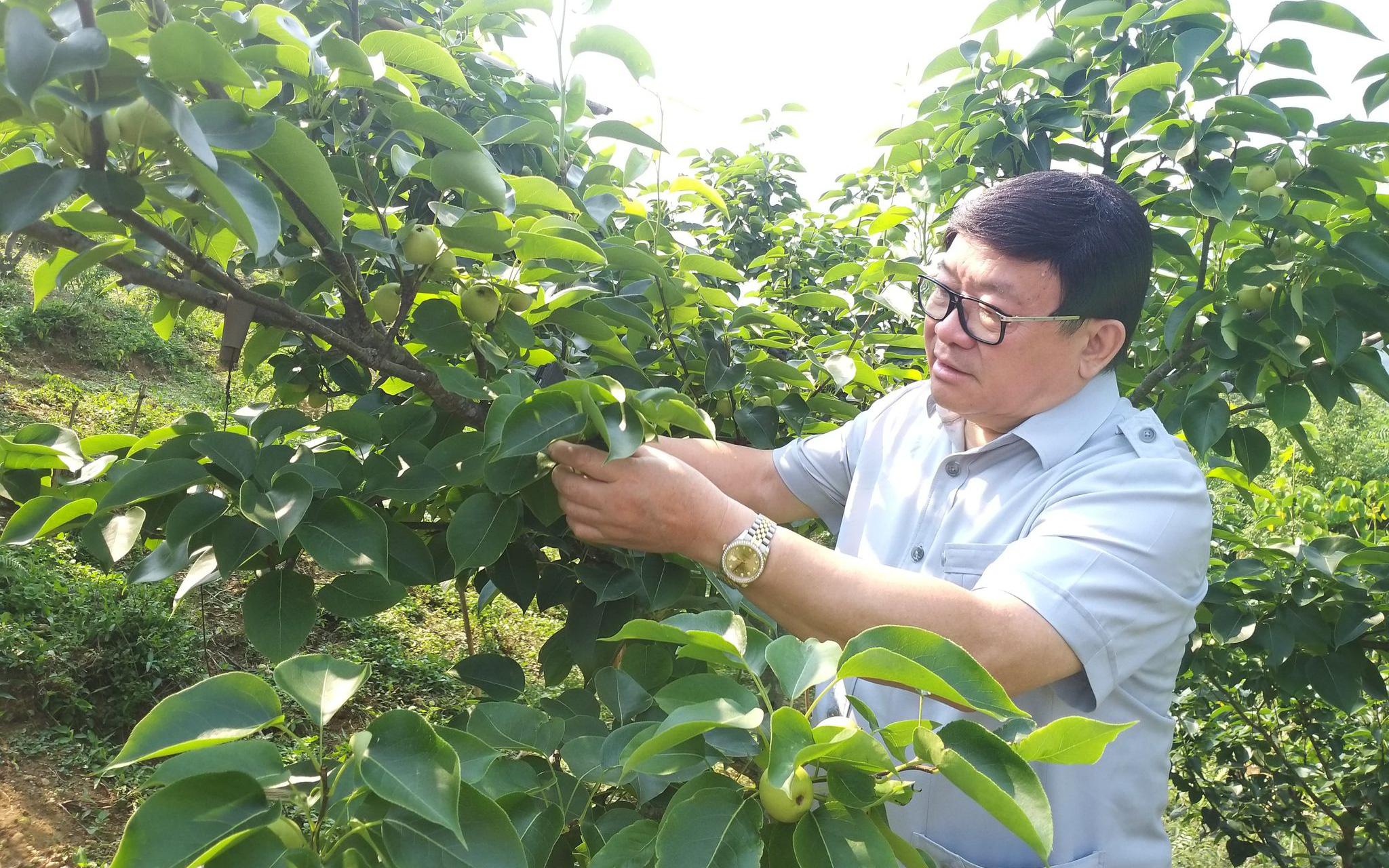 Lai Châu: Nhiều nông dân ở huyện đặc biệt khó khăn thành triệu, tỷ phú nhờ trồng cây đặc sản này