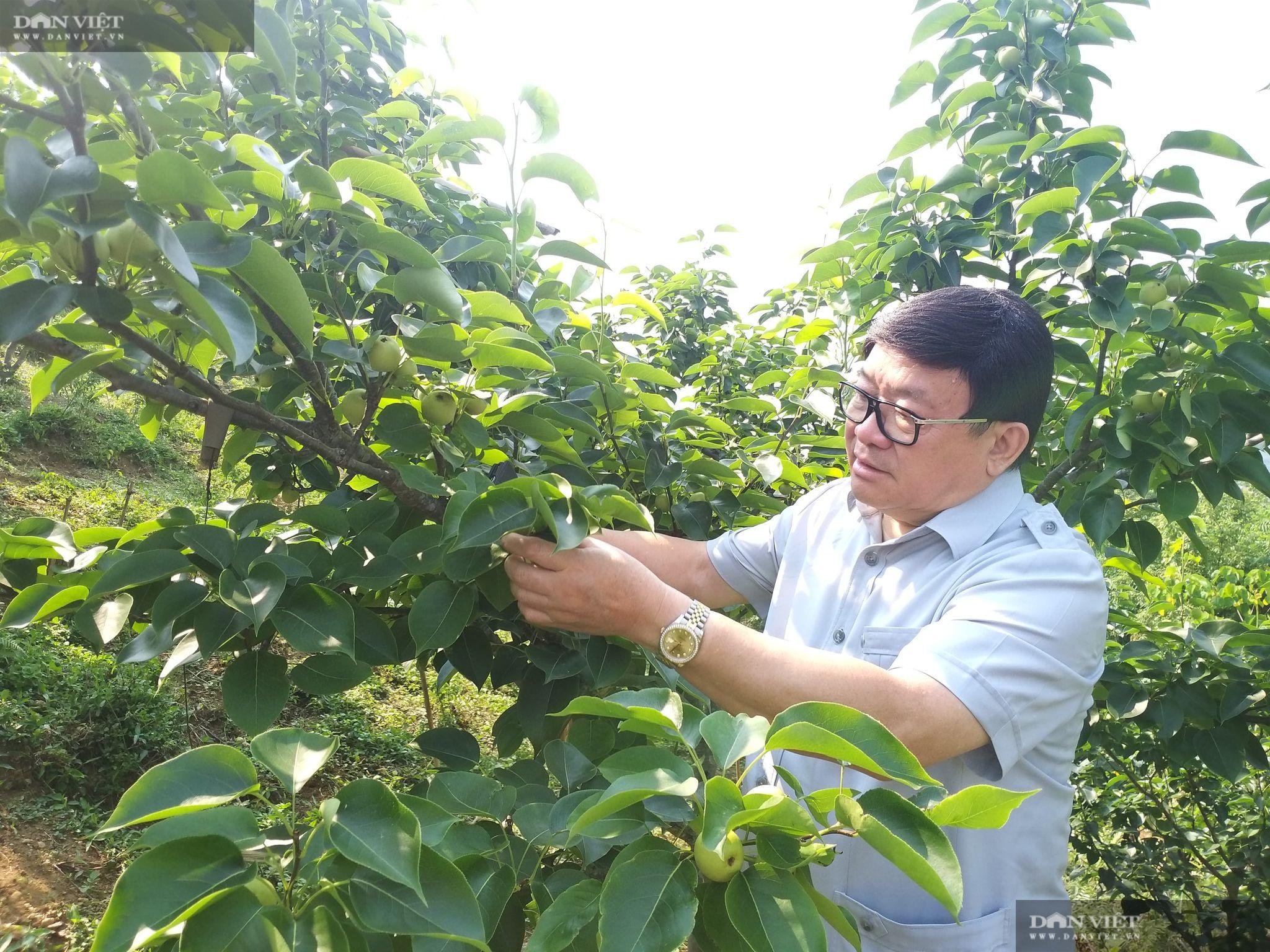Lai Châu: Nhiều nông dân ở huyện nghèo vùng cao bỗng chốc thành... triệu, tỷ phú nhờ trồng loại hoa, quả đặc sản này - Ảnh 1.