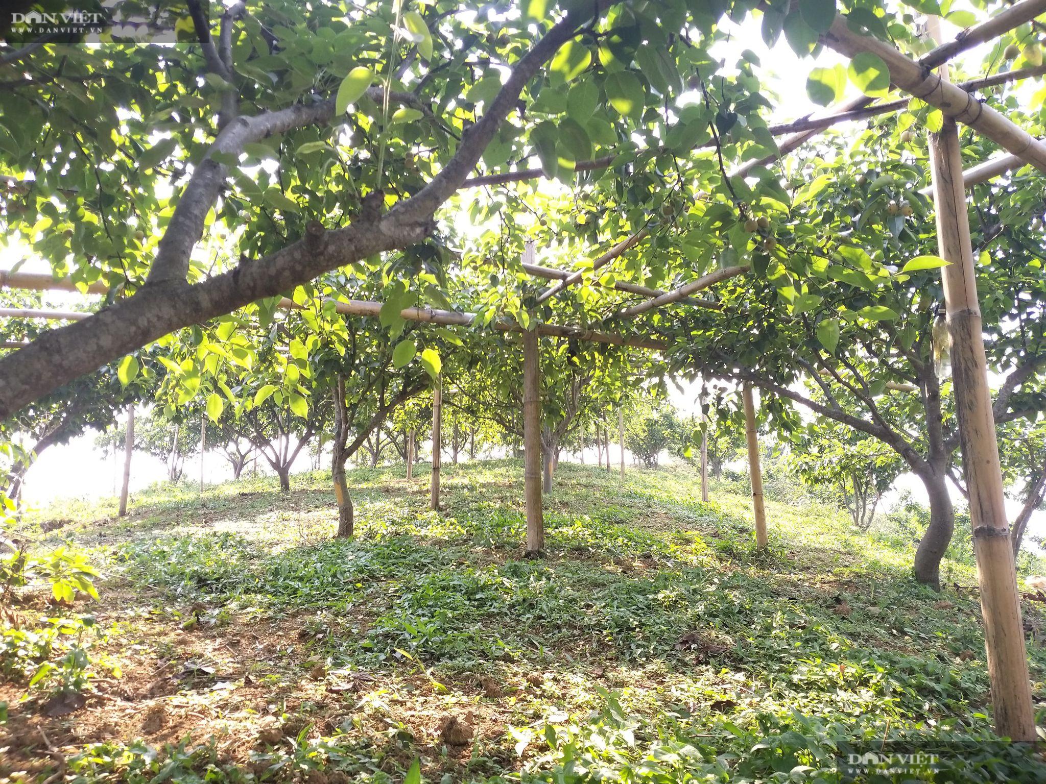 Lai Châu: Nhiều nông dân ở huyện nghèo vùng cao bỗng chốc thành... triệu, tỷ phú nhờ trồng loại hoa, quả đặc sản này - Ảnh 2.