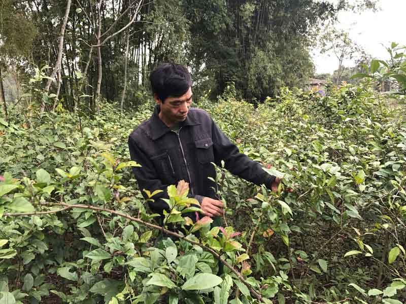Hòa Bình: Cả làng trồng thứ cây gì, ít phải chăm mà cứ đến tháng này các cửa hàng thuốc Đông y kéo đến mua? - Ảnh 1.