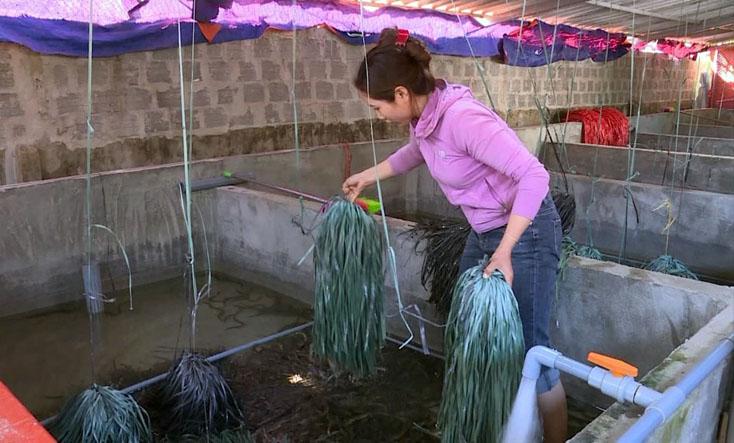 """Quảng Bình: Đánh liều """"vác"""" 200 triệu về xây bể nuôi lươn không bùn, 8 tháng chăm thấp thỏm, bất ngờ bắt lên 2 tấn - Ảnh 1."""