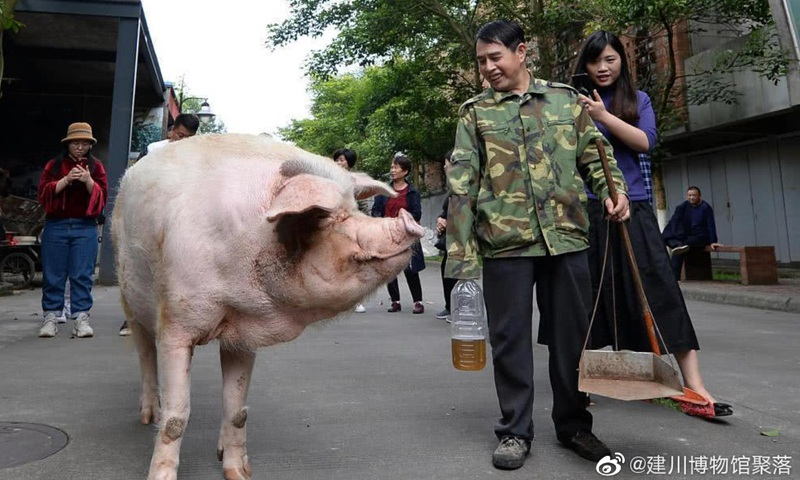 Chuyện xúc động về chú lợn nổi tiếng nhất Trung Quốc - Ảnh 2.