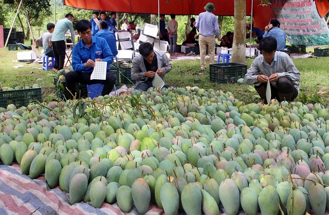 Lập tổ công tác liên ngành hỗ trợ tiêu thụ nông sản - Ảnh 2.