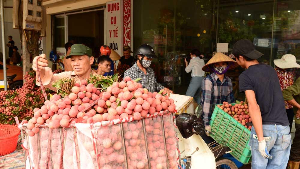 Bắc Giang: Lô vải thiều đầu tiên sắp sang Nhật Bản, huyện Tân Yên chuẩn bị những gì? - Ảnh 3.