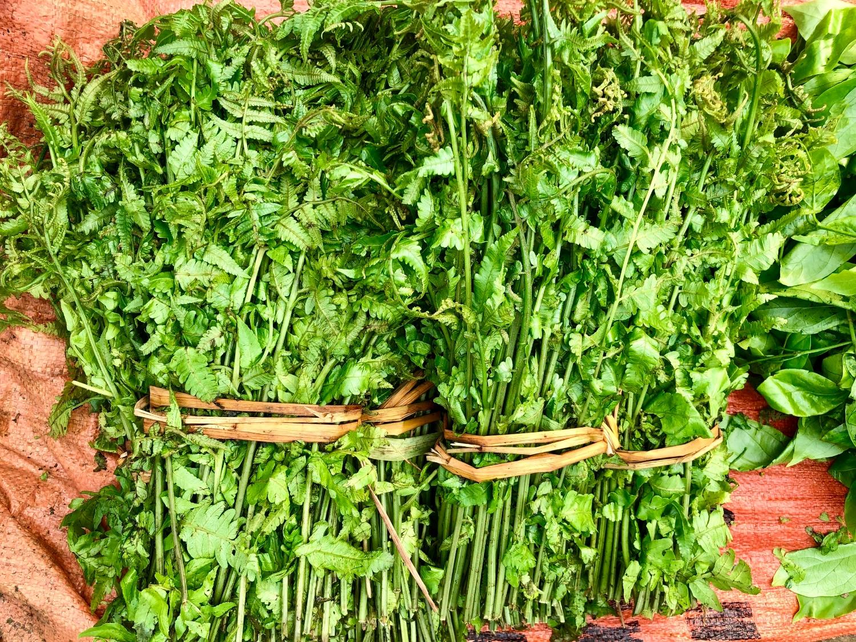 Đặc sản rau rừng ở Cao Bằng, đây thứ rau ăn ngọt như mì chính, kia thứ rau mầm mọc nhọn như lưỡi giáo - Ảnh 4.