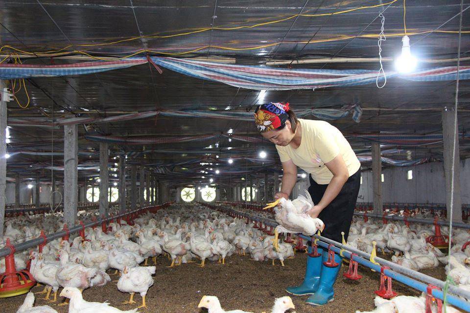 Giá gia cầm hôm nay 15/5: Giá vịt thịt ba miền giảm dần, gà công nghiệp chững giá - Ảnh 1.