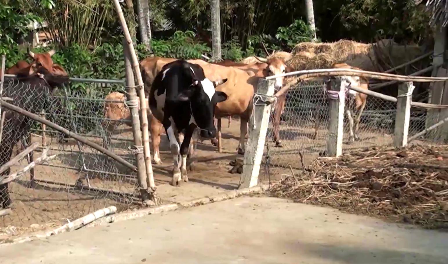 """Tiền Giang: """"Độc chiêu"""" nuôi bò, ông nông dân từ nghèo khó trở thành giàu có, được Thủ tướng khen - Ảnh 2."""