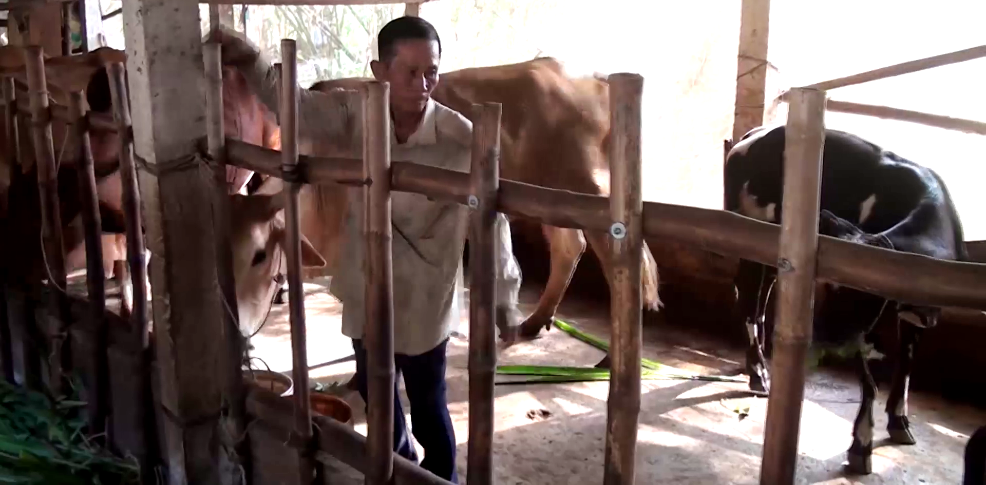 """Tiền Giang: """"Độc chiêu"""" nuôi bò, ông nông dân từ nghèo khó trở thành giàu có, được Thủ tướng khen - Ảnh 4."""