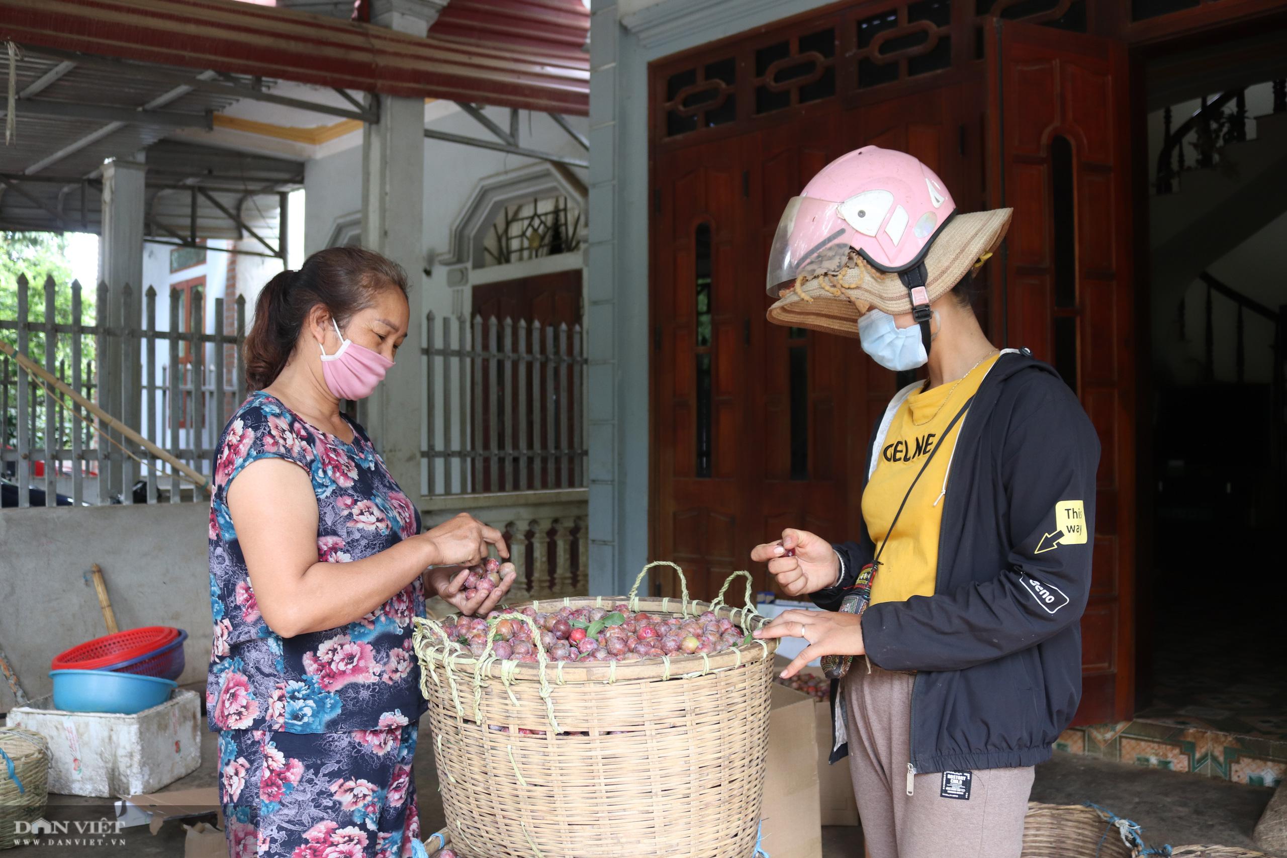 Mận hậu Sơn La được mùa nhưng giá giảm kỷ lục - Ảnh 5.