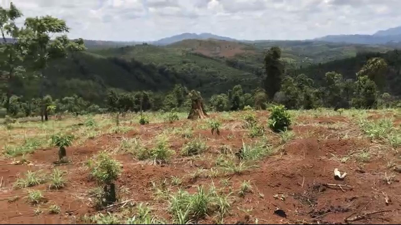 Đắk Nông: Tạm đình chỉ điều tra 6 cựu chiến binh từng bị kết án phá rừng  - Ảnh 2.