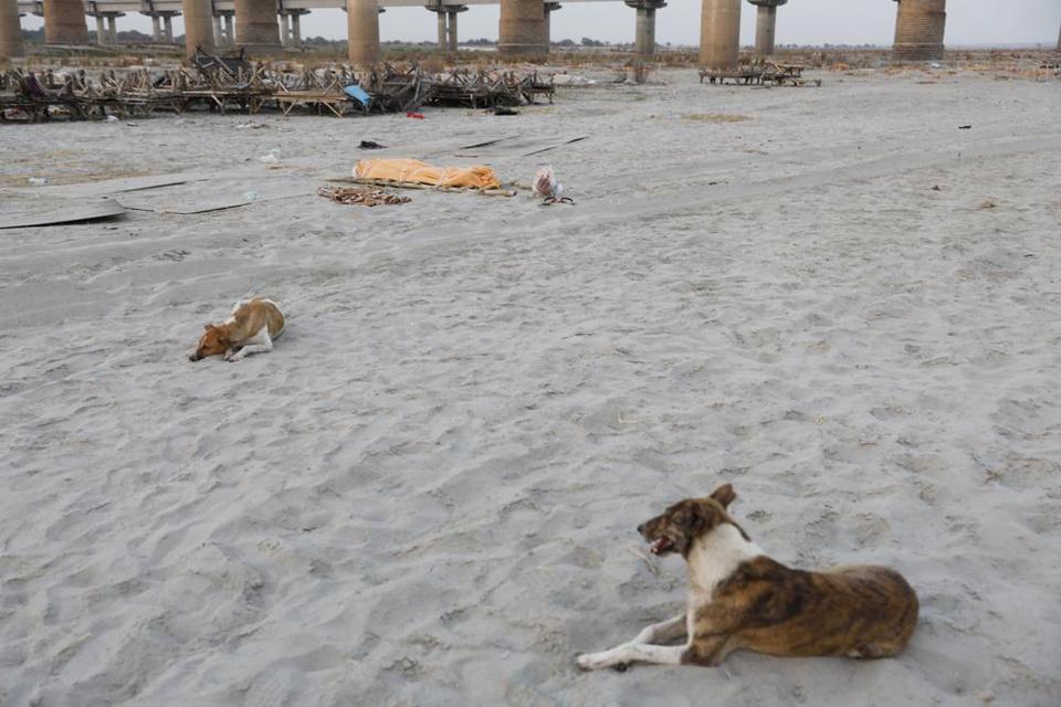 Trận mưa khiến hàng loạt thi thể lộ ra trên bãi cát bên bờ sông Hằng - Ảnh 6.