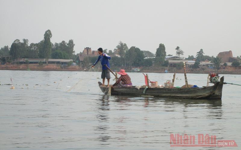 An Giang: Cá bông lau đặc sản trên sông Vàm Nao ngày càng hiếm, bắt được con to sao dân bà cậu vẫn buồn so? - Ảnh 5.