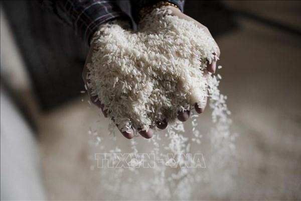 Philippines giảm thuế nhập khẩu gạo để đảm bảo an ninh lương thực - Ảnh 1.