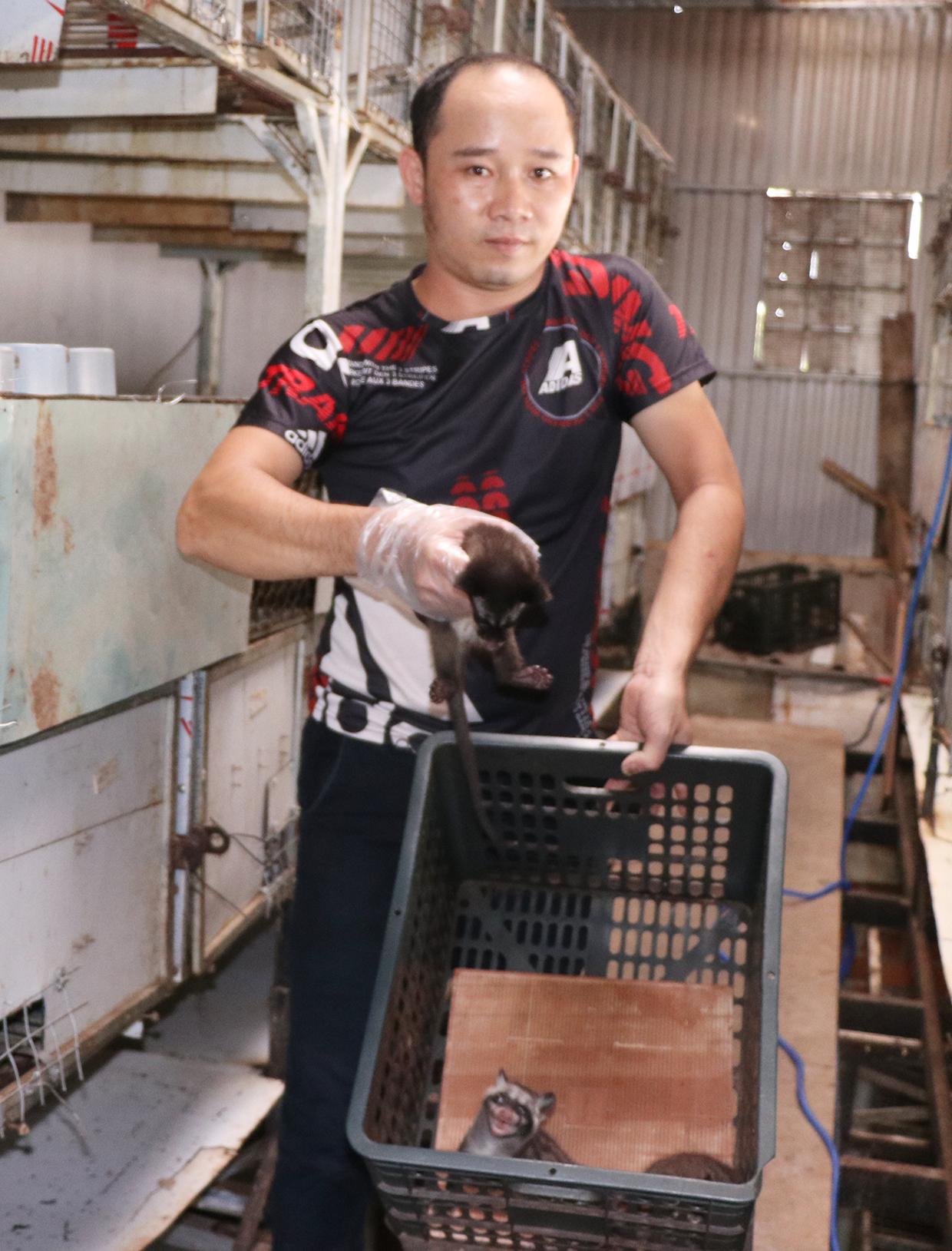 """Gia Lai: Chế được """"thần dược"""" trị bệnh viêm ruột cho chồn hương, anh nông dân chỉ bán giống đã bỏ túi 200 triệu - Ảnh 3."""