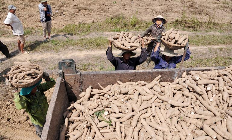 Phú Yên: Đề xuất xây thêm nhà máy chế biến tinh bột sắn ở huyện Sơn Hòa đang vấp phải luồng ý kiến gì? - Ảnh 1.