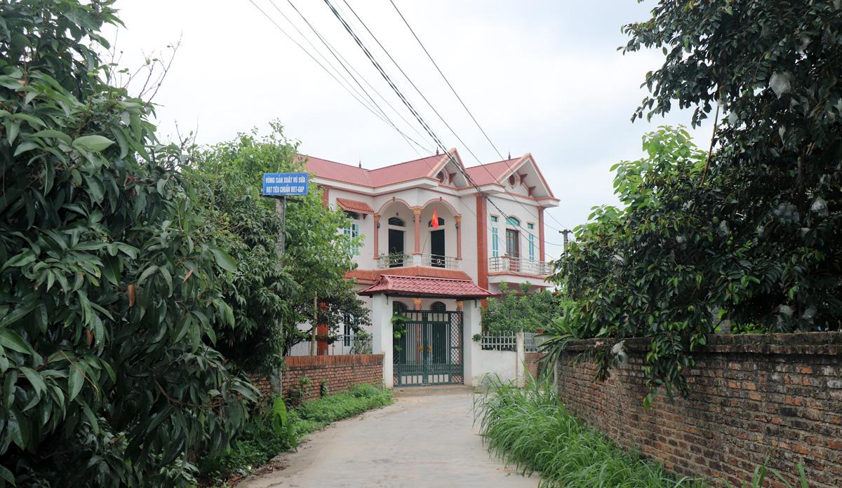 """Bắc Giang: """"Làng vú sữa"""" trúng mùa trúng giá, có nhà thu nửa tỷ đồng/vụ, xây nhà đẹp như biệt thự - Ảnh 6."""