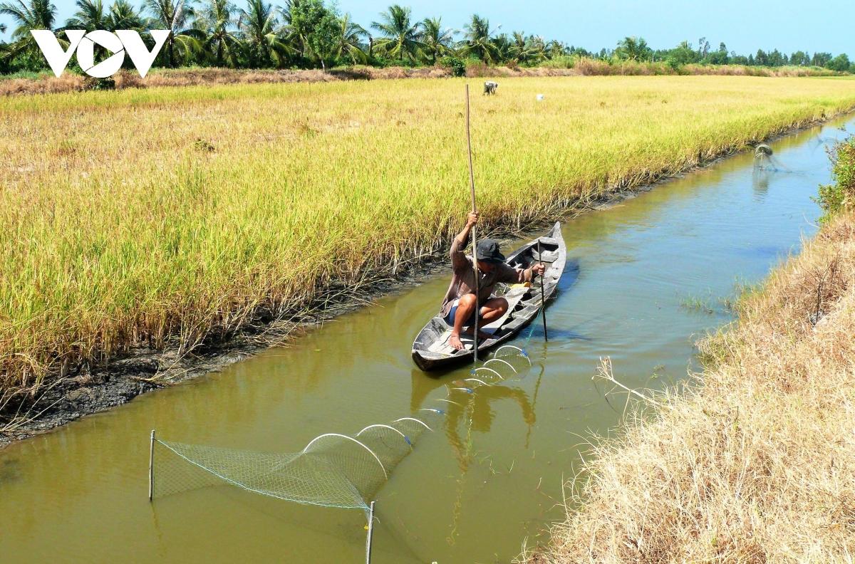 Người dân và doanh nghiệp cùnglàm để cótôm sinh thái, lúa hữu cơ - Ảnh 1.