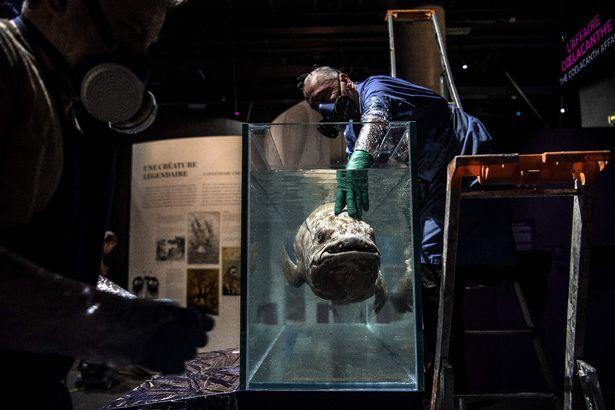 Tìm thấy cá bốn chân 'đã tuyệt chủng' 420 triệu năm tuổi vẫn còn sống dưới đại dương - Ảnh 1.