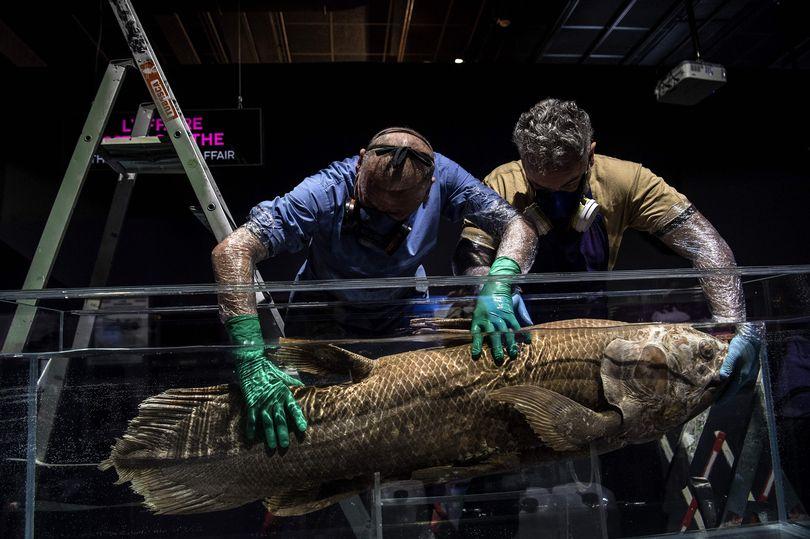 Tìm thấy cá bốn chân 'đã tuyệt chủng' 420 triệu năm tuổi vẫn còn sống dưới đại dương - Ảnh 2.